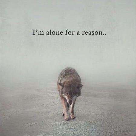 stt cô đơn chất